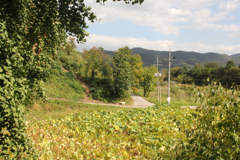 Without Filters Suburban Countryside Green Green Green!  Country Life EyeEm Korea Korea