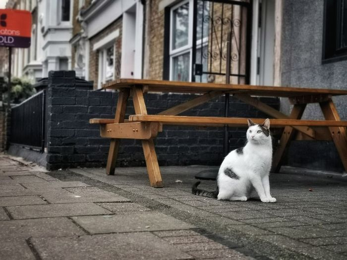 Cat sitting on a building