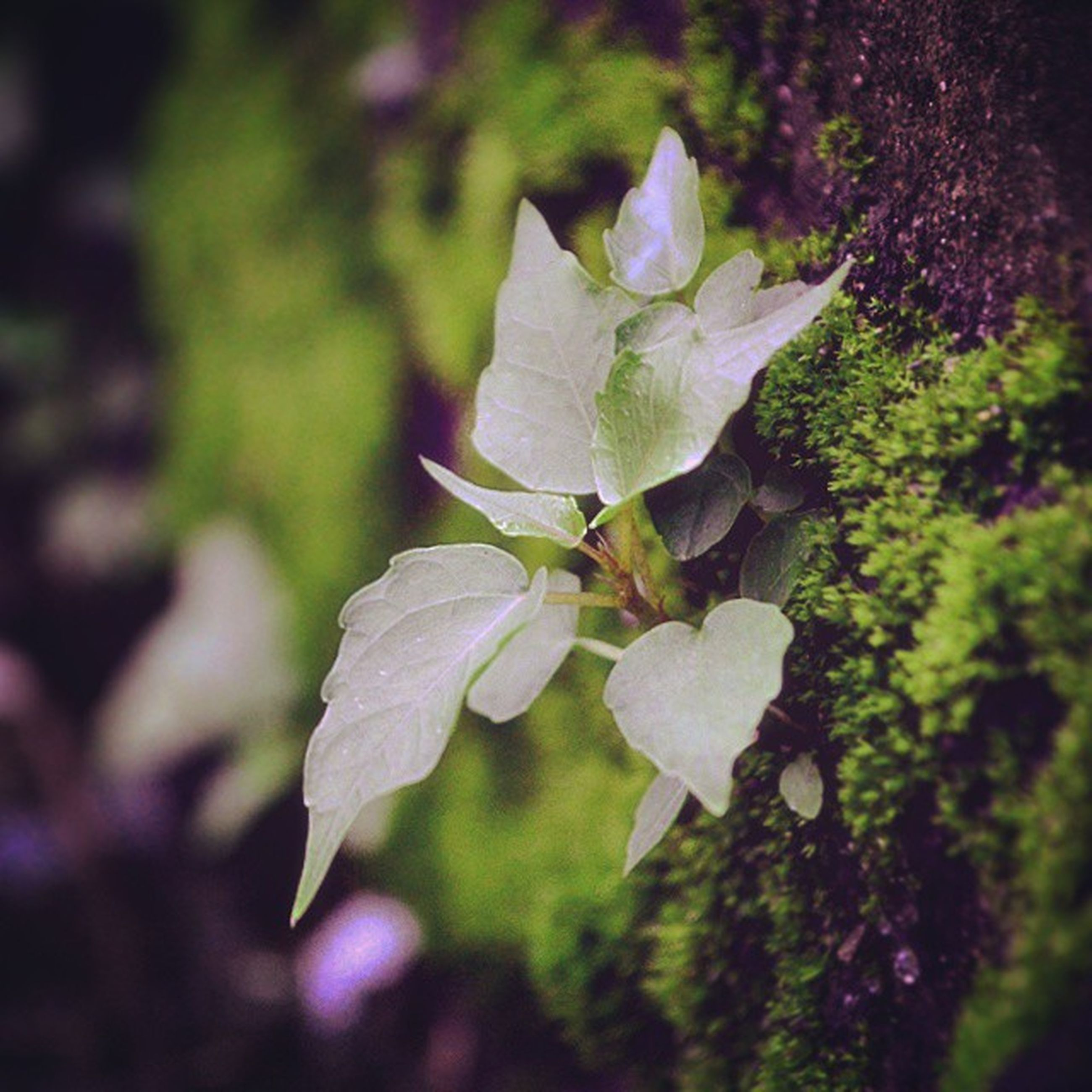 growth, flower, leaf, freshness, beauty in nature, plant, nature, fragility, close-up, focus on foreground, green color, petal, selective focus, blooming, outdoors, park - man made space, tree, day, no people, in bloom