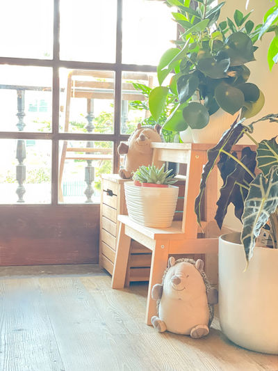 Potted plants on table by window