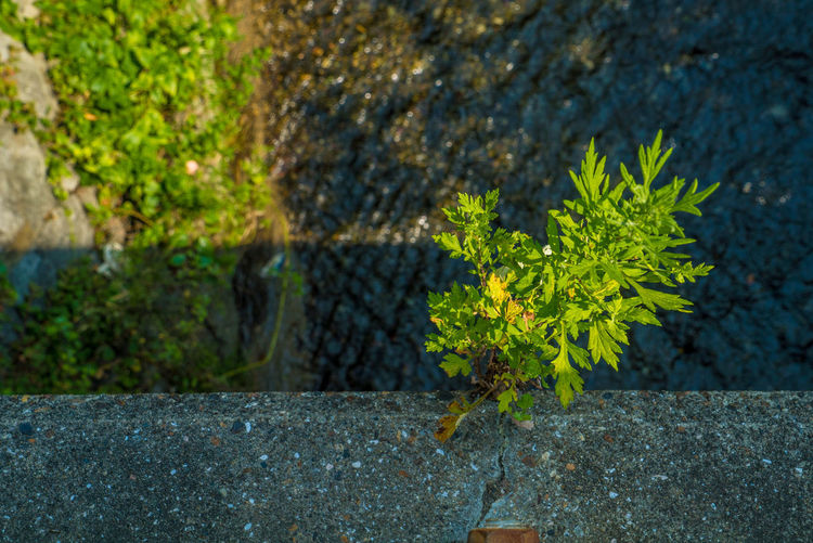 EyeEm Nature Lover EyeEmNewHere Beauty In Nature Close-up Day Green Color Growth High Angle View Leaf Lichen Moss Nature No People Outdoors Plant Plant Part Rock Rock - Object Selective Focus Solid Street Streetphotography Tree Vulnerability  Water