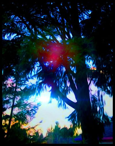 Tree Illuminated Growth Nature Branch Outdoors Scenics Backgrounds Low Angle View EyeEm Gallery Outdoor Photography All Around This Beautiful World Multi Colored Focus On Foreground Dreamlike What Does Peace Look Like To You? Fresh And New Make A Wish Arts Culture And Entertainment Ringing In The New Year Hello 2017 Happynewyear NewYear 2016 Out! Artistic Perception