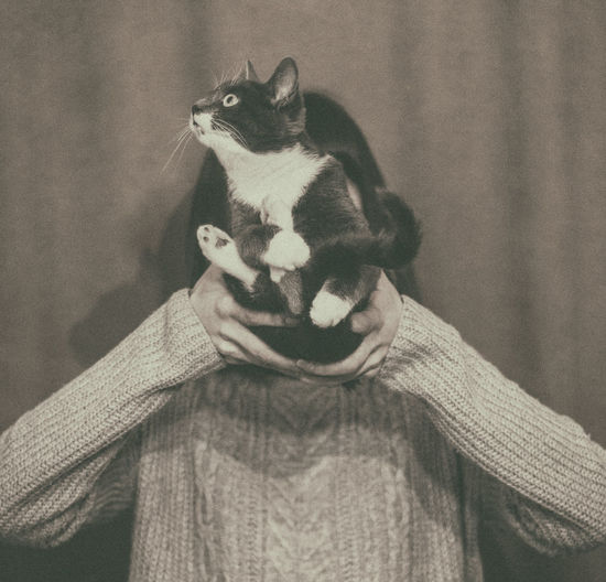 Cat in Girls Hands Animal Themes Close-up Day Dog Domestic Animals Domestic Cat Friendship Girl Human Body Part Human Hand Indoors  Mammal One Animal One Person People Pets Sepia EyeEmNewHere Pet Portraits
