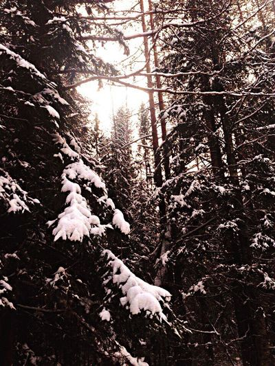 Tree Nature Forest Growth Beauty In Nature Low Angle View Sunbeam Day Winter Cold Temperature Outdoors No People Scenics Branch Sky Russia Лес сказка зима снег First Eyeem Photo