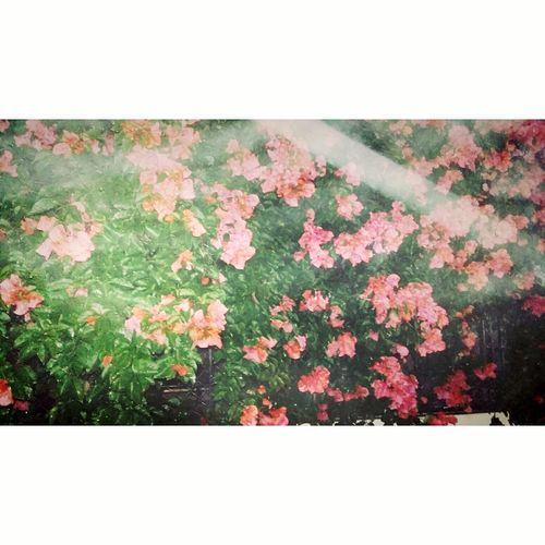 ☔🌹 Flowers In Rain