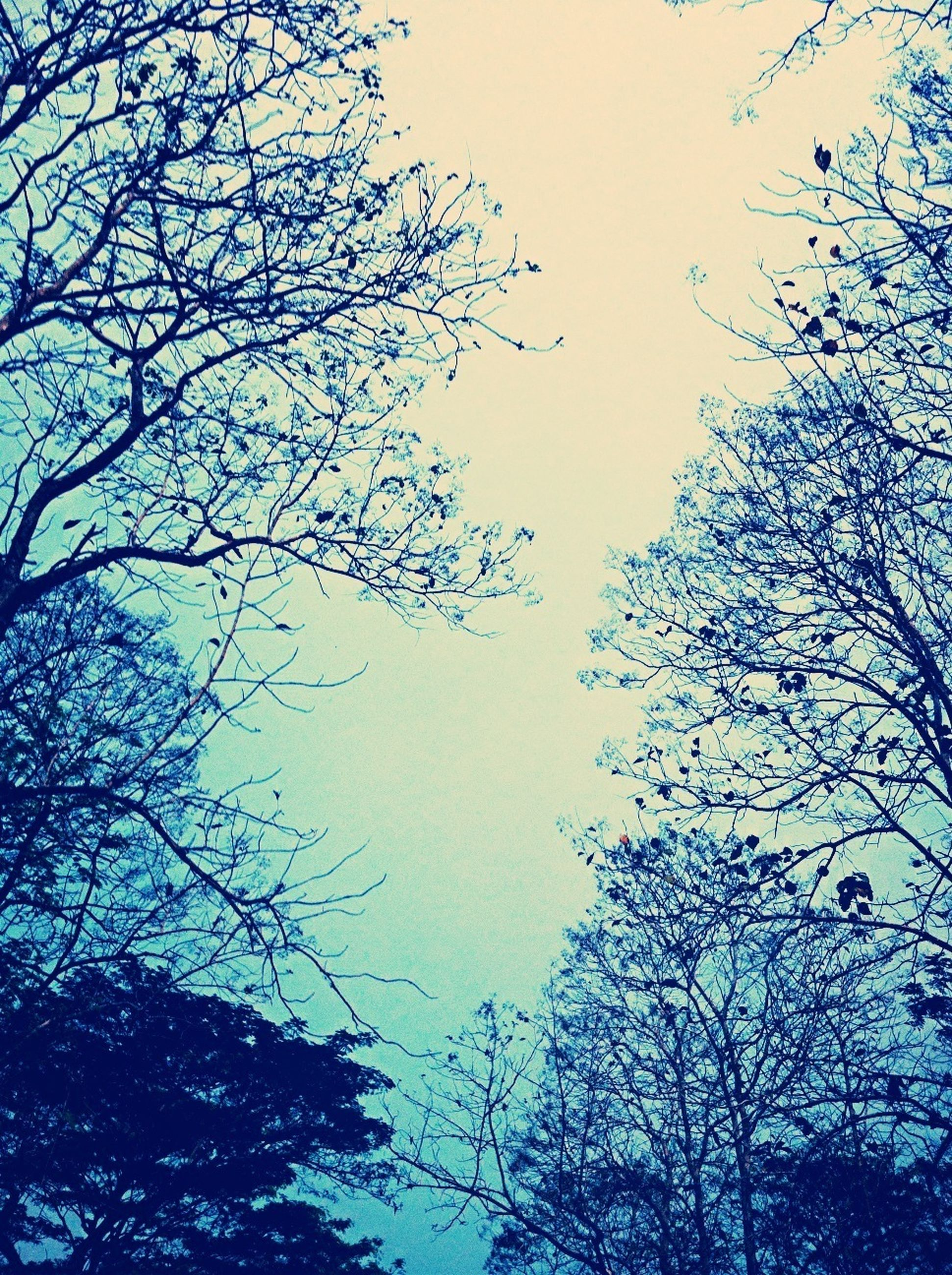 low angle view, branch, tree, clear sky, bare tree, nature, silhouette, blue, sky, growth, beauty in nature, tranquility, outdoors, no people, day, dusk, high section, copy space, scenics, treetop