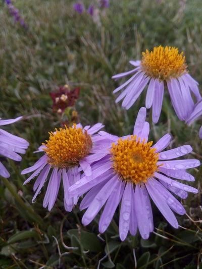 Цветок First Eyeem Photo