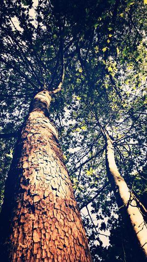 First Eyeem Photo Nature Tree
