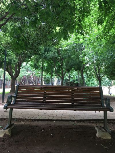 Be. Ready. Bench Seat Trees Wooden Bench Tree And Bench Tree Nature Day No People Outdoors Relaxation Seat Beauty In Nature Ntsudzu Johannesburg Constantia EyeEmNewHere Jozi EyeEm Gallery Eye4photography  EyeEm Best Shots Be. Ready. Modern Workplace Culture
