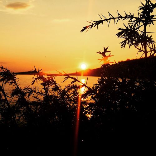Sunset Sun Silhouette Scenics Beauty In Nature Tranquil Scene Water Plant Idyllic Growth Sky Close-up Majestic Tranquility Nature Orange Color Vibrant Color Back Lit Outdoors Sea