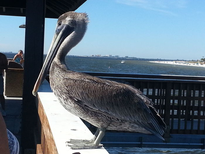 Animal Themes Animal Wildlife Animals In The Wild Bird Day Gray Heron Nature No People One Animal Outdoors Pelican Perching Sea Water