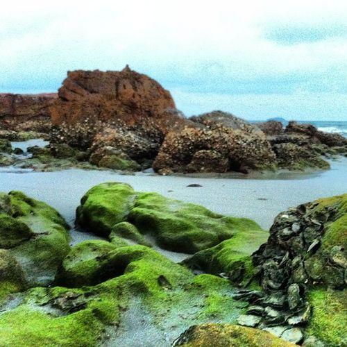 หิน กับ หอย พากันเขียว