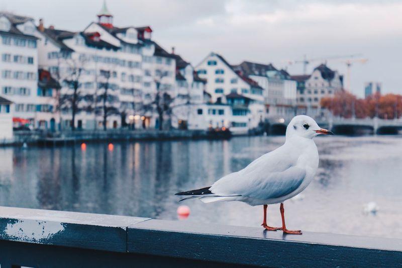 Seagull perching on a railing