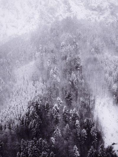 Winter trees IPSTrees&Leaves IPSScenery IPSWeather IPS2016Nature