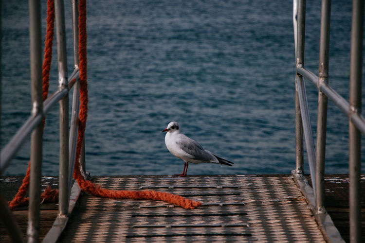 Seagull On Pier Against Sea