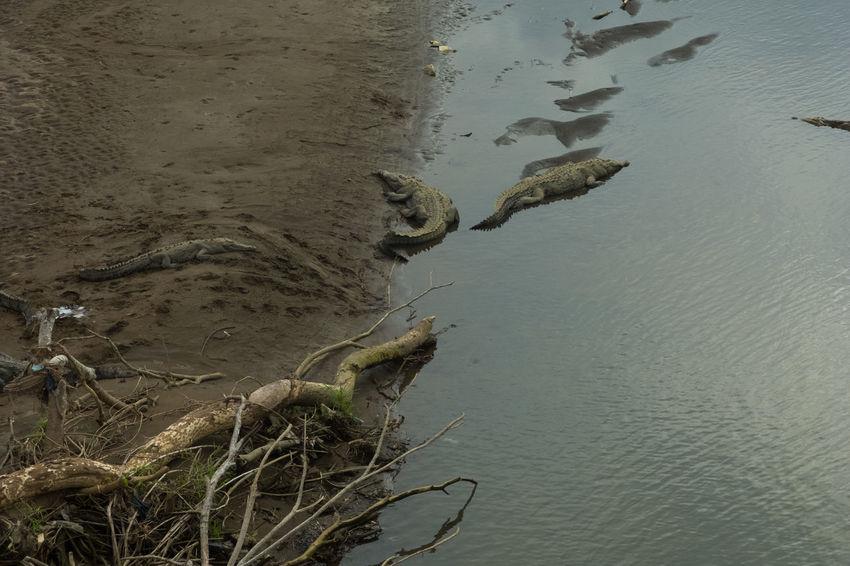 Costa Rica Hiking Crocodile Hike Jungle Ocean River Road Trip Wildlife