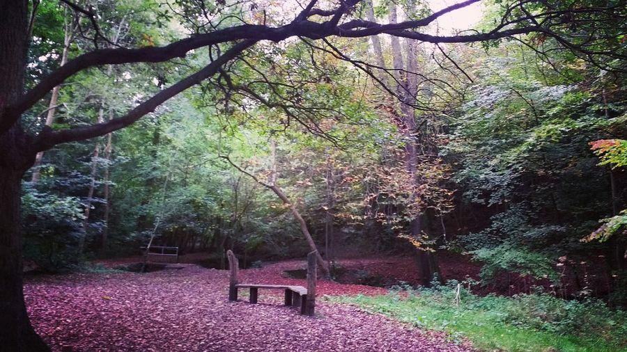 Autumn 🍃🍂