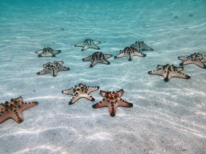 Starry starry sea