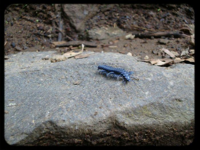 Abugslife Taking Photos Macro Photography Nature
