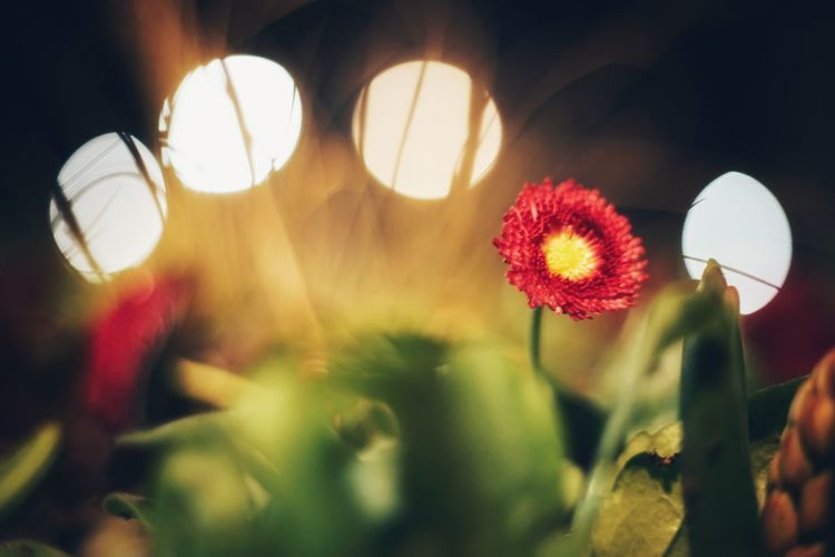 Close-up of illuminated flowering plants against blurred background
