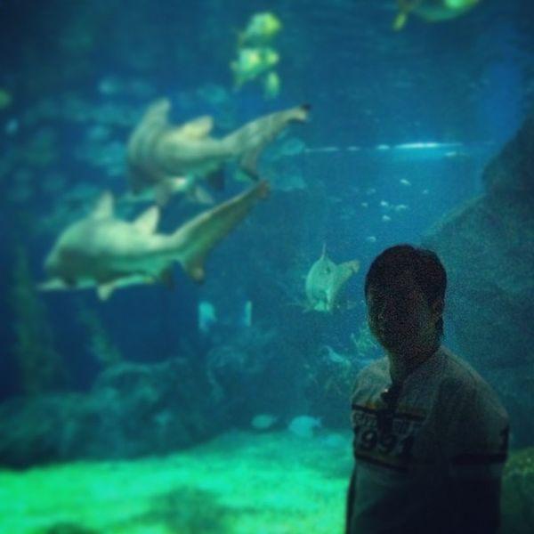 Bangkok Sealife Holiday