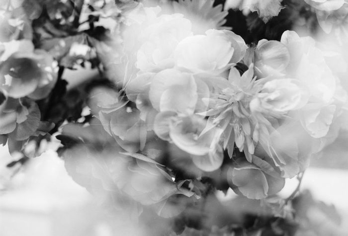 Acros100 Beautiful Beauty Beauty In Nature Beauty In Nature Black & White Black And White Blackandwhite Blooming Blossom Close-up Enjoying Life EyeEm EyeEm Best Shots EyeEm Gallery EyeEm Nature Lover EyeEmBestPics Flower Flower Head Fm2 Monochrome Nature Double Exposure Showing Imperfection Black And White Friday
