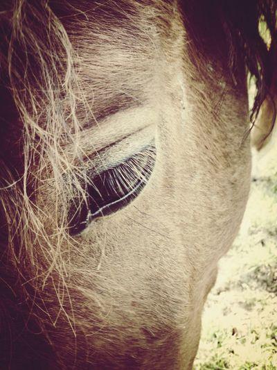 Horse Horseeye Wunderful OpenEdit Beautiful
