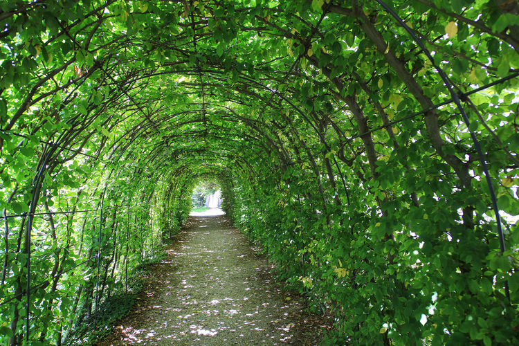 Green plant tunnel in the garden Plant Growth Green Color The Way Forward Footpath No People Nature Diminishing Perspective Beauty In Nature Outdoors Foliage Tranquility Scenics - Nature Green Tunnel Perspective Park Garden Tree Path Deep Arch Passage Hedge Summer