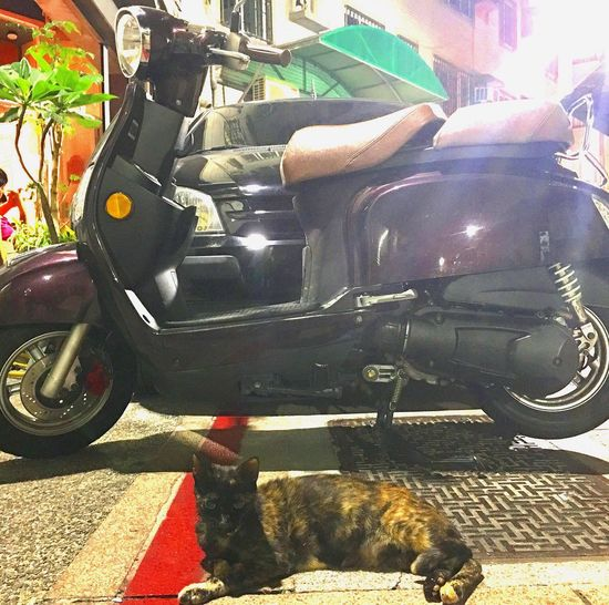Cat Streetcat Iphone6splus Nightlife Taiwan Kaohsiung DLERS