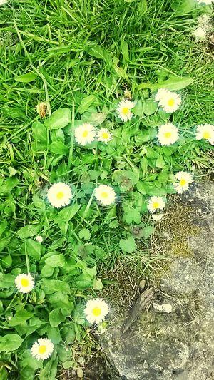 Ey bahar gel artık' Walking Around People Watching Relaxing Enjoying The Sun Taking Photos Flower#garden#nature#ecuador#santodomingoecuador#eyeEmfollowers#iphoneonly#nofiltrer#macro_garden#pretty#beautiful#followme#sho Flowers,Plants & Garden Baharhavası Bahar Geldi