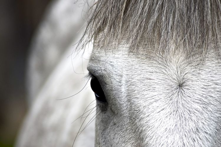 Close-up of horse
