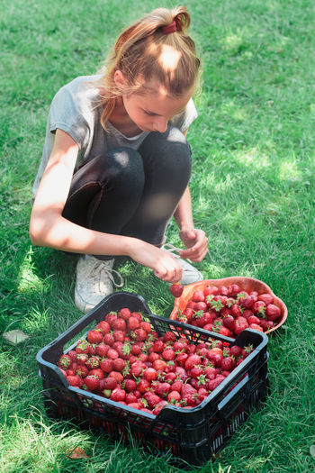 Girl putting freshly picked strawberries to a bowl Berry Child Childhood Family Farm Food Fresh Fruit Garden Girl Green Harvest Healthy Juicy Natural Nature Organic People Picking Raw Season  Sibilings Strawberries Summer Sweet