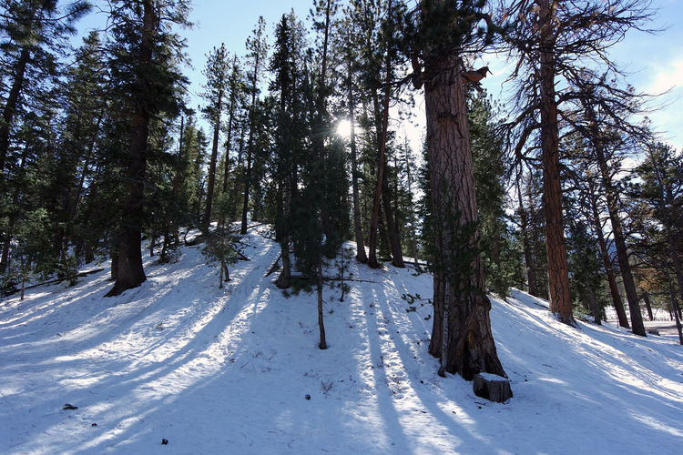 Las Vegas USA Beauty In Nature Cold Temperature Forest Lee Canyon Scenics Snow Tranquility Tree White Color Winter