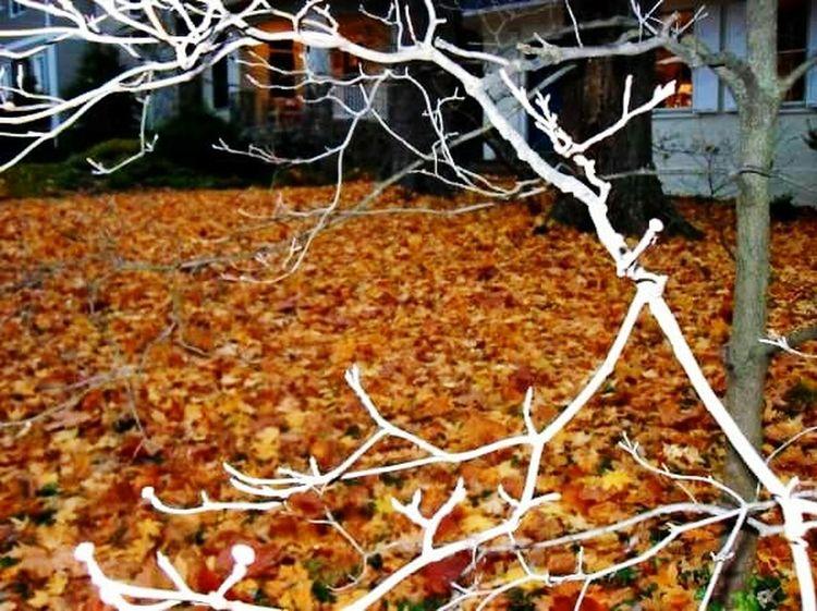Colors Of Autumn Fall Leaves Darker Days Tree_collection  Happy Halloween 20016 NE Washington DC Haloween Horrors Fall Beauty