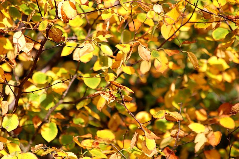 Plant Leaf Growth Nature Plant Part No People Beauty In Nature Autumn Focus On Foreground Day Tree Branch Close-up Sunlight