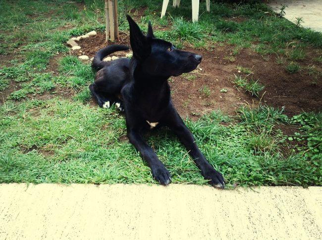 "My pupy ""Lupo"" First Eyeem Photo"