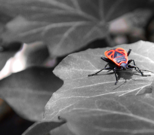 Animal Themes Animals In The Wild Close-up Insect Nature No People One Animal Outdoors Red