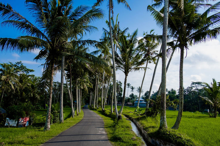A road with palm trees. Tree Plant Palm Tree Tropical Climate Sky Growth Beauty In Nature Trunk Tree Trunk Direction Nature Land Scenics - Nature The Way Forward Tranquility No People Green Color Footpath Tranquil Scene Grass Coconut Palm Tree Treelined Outdoors Tropical Tree Stay Out