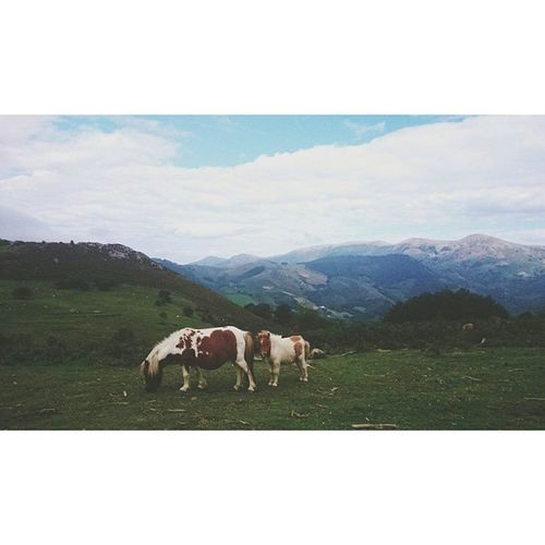 Ponnys que se