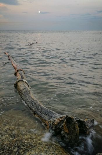 log by the sea Floating On Water Floting Log Water Outdoors Nature Day