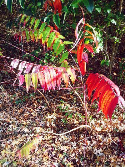 autumn past