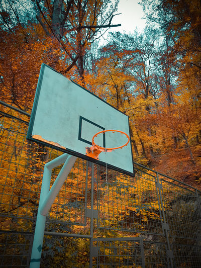 Low angle view of basketball hoop against trees during autumn