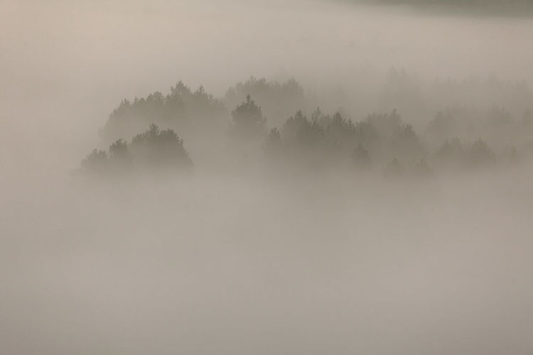 Trees on landscape against sky at foggy weather