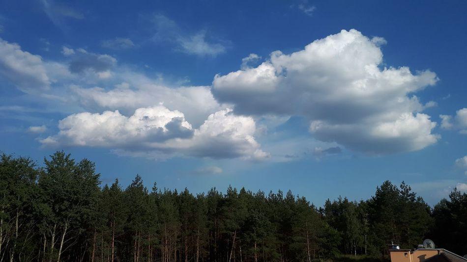 Summer sky Tree Blue Sky Cloud - Sky Tree Area Treetop