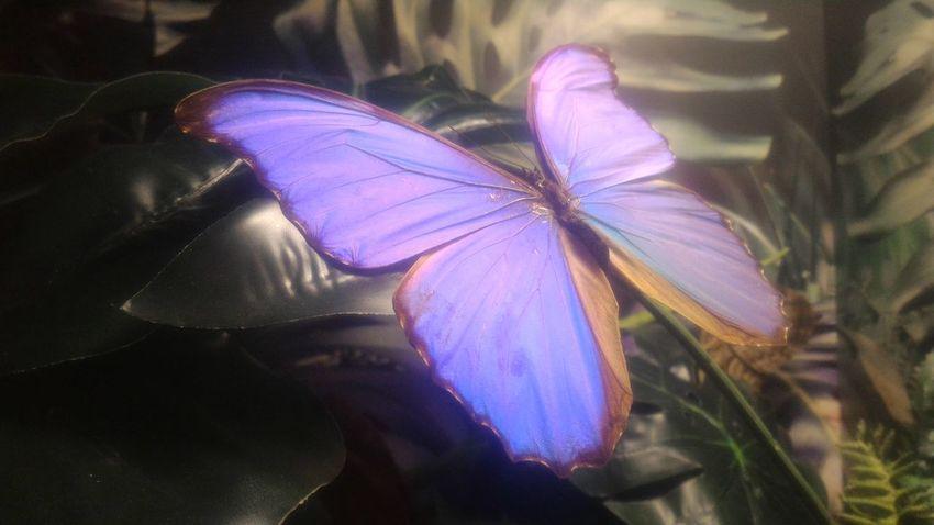 Purple Butterfly Botany Kelebek Kelebeklervadisi Türkiye Konya Purplebutterfly