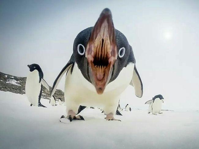 National Geographic Pinguin Ooh Popular Photos Taking Photos Dangerous First Eyeem Photo