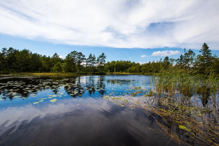 Sweden Swedish