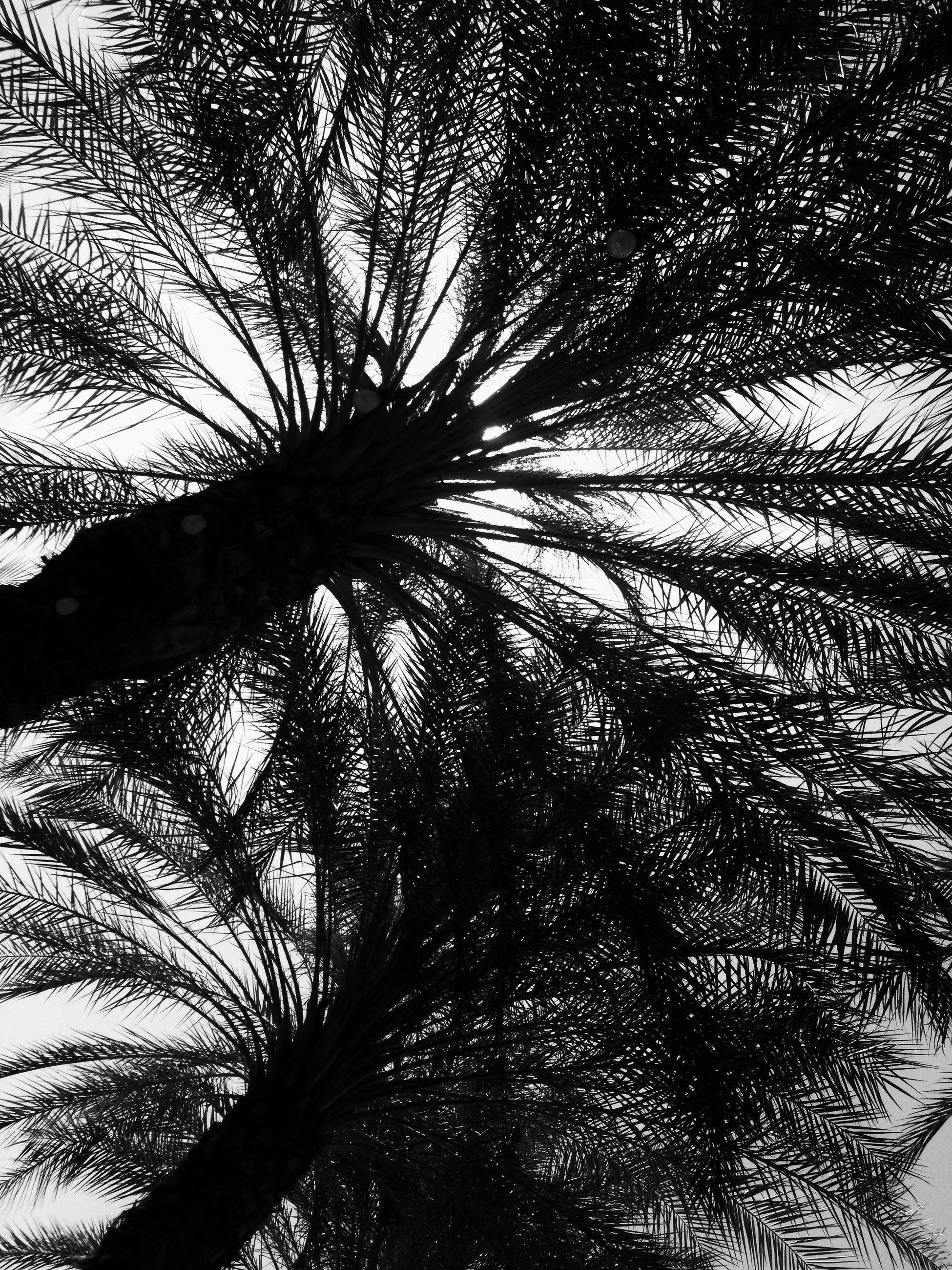 palm tree, low angle view, tree, growth, nature, no people, tree trunk, full frame, beauty in nature, close-up, outdoors, day, sky