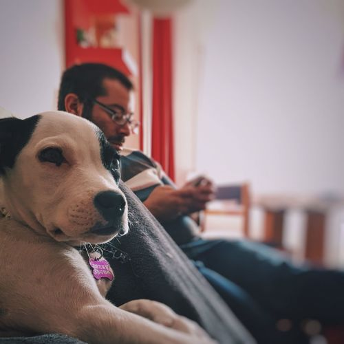 Puppy Relaxing By Man At Home
