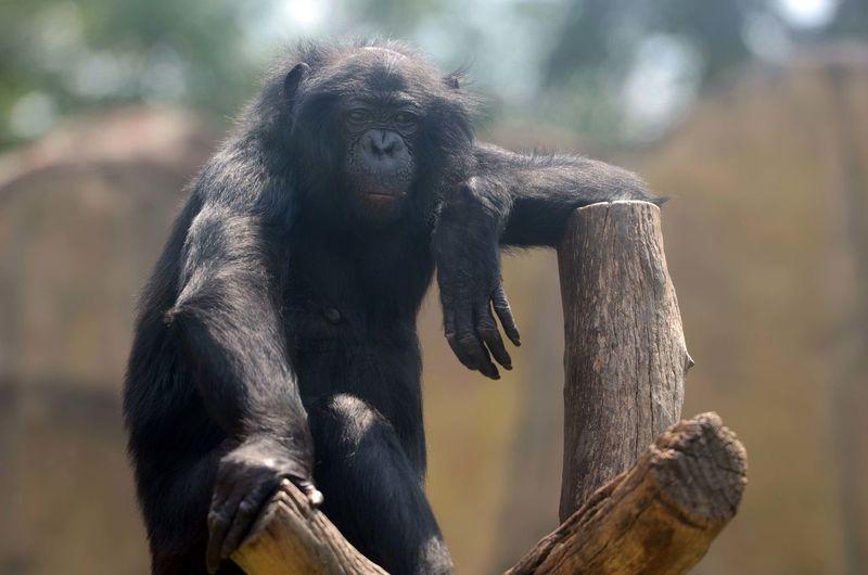Elephant sitting on wood in zoo